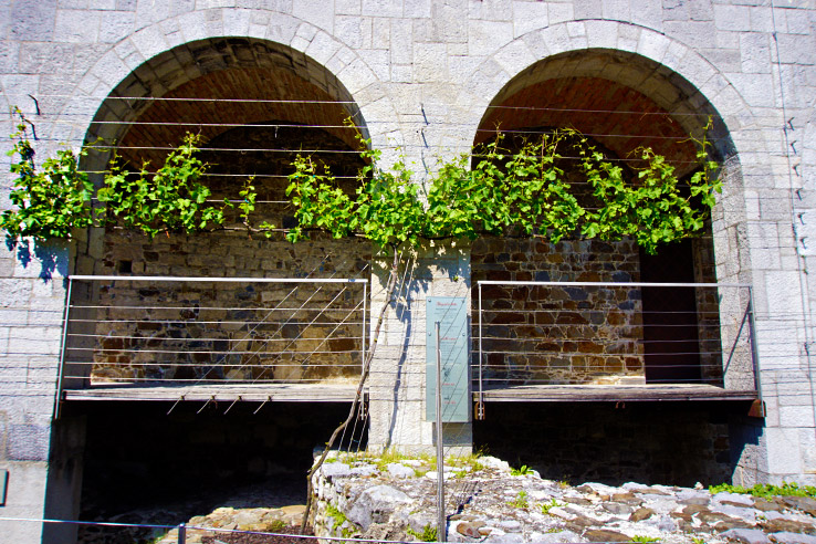 Surviving Europe: 48 Hours Discovering the Best of Ljubljana and Lake Bled - Ljubljana Castle Wine