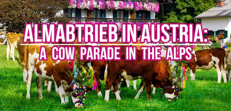 Surviving Europe: Almabtrieb in Austria A Cow Parade in the Alps the Alps - Feature
