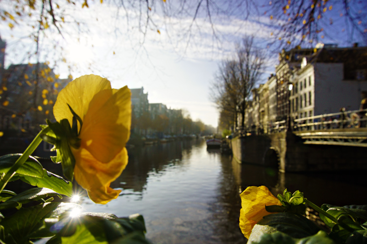 Surviving Europe: How to Follow Through on Your New Years Resolution to Travel - Flower at Amsterdam