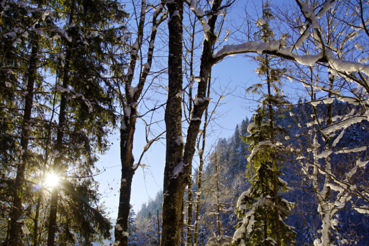 Surviving Europe: Hahnenkamm World Cup Ski Race in Kitzbuhel Austria - Frozen Trees