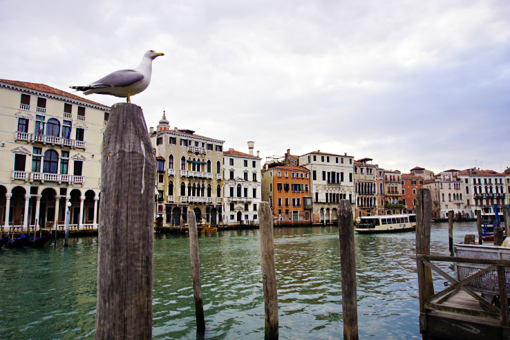 Surviving Europe: 13 Essential Venice Survival Tips to Enjoy Your Trip - Bird
